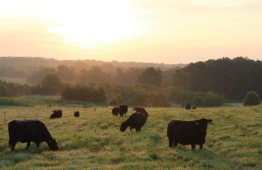 North Carolina Farmland